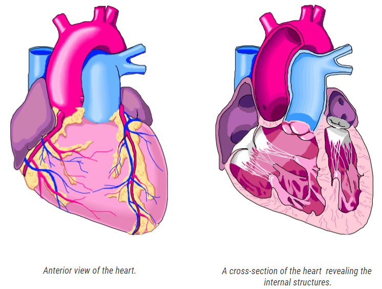 Made with SmartDraw's healthcare illustrations software