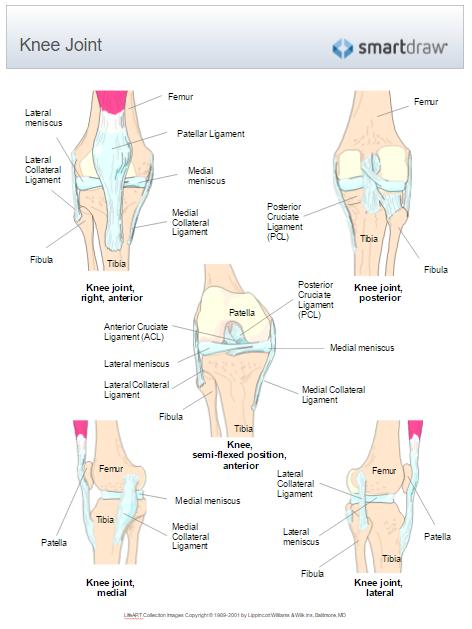 Medical illustration example