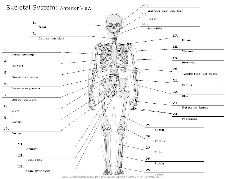 Fill in the blank anatomy diagrams