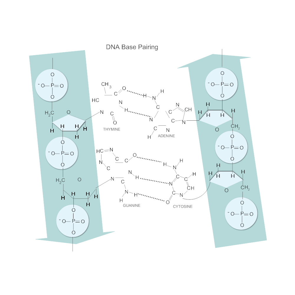 Example Image: DNA Base Pairing Diagram