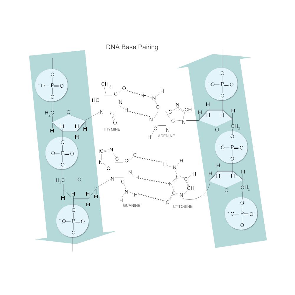 Example Image: DNA Base Pairing Diagram