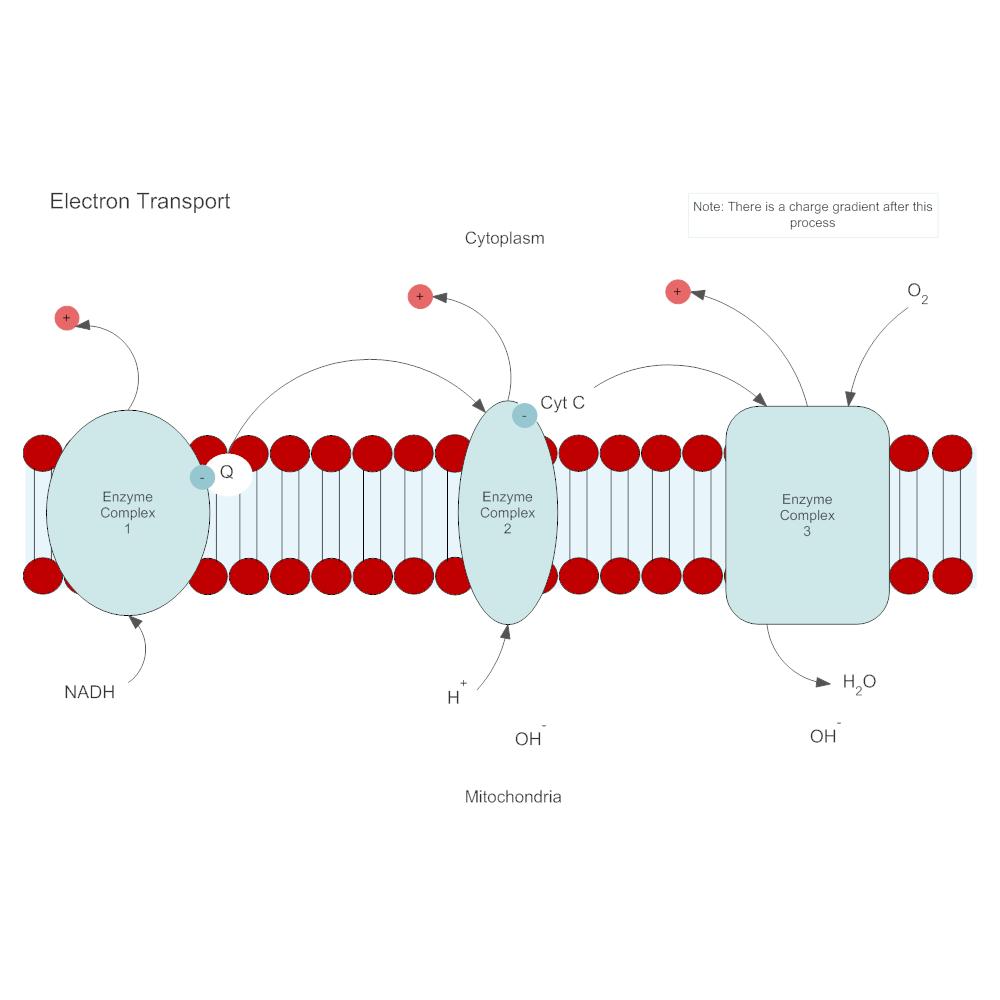 Example Image: Electron Transport Biology Diagram