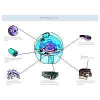 Eukaryotic Cell Diagram