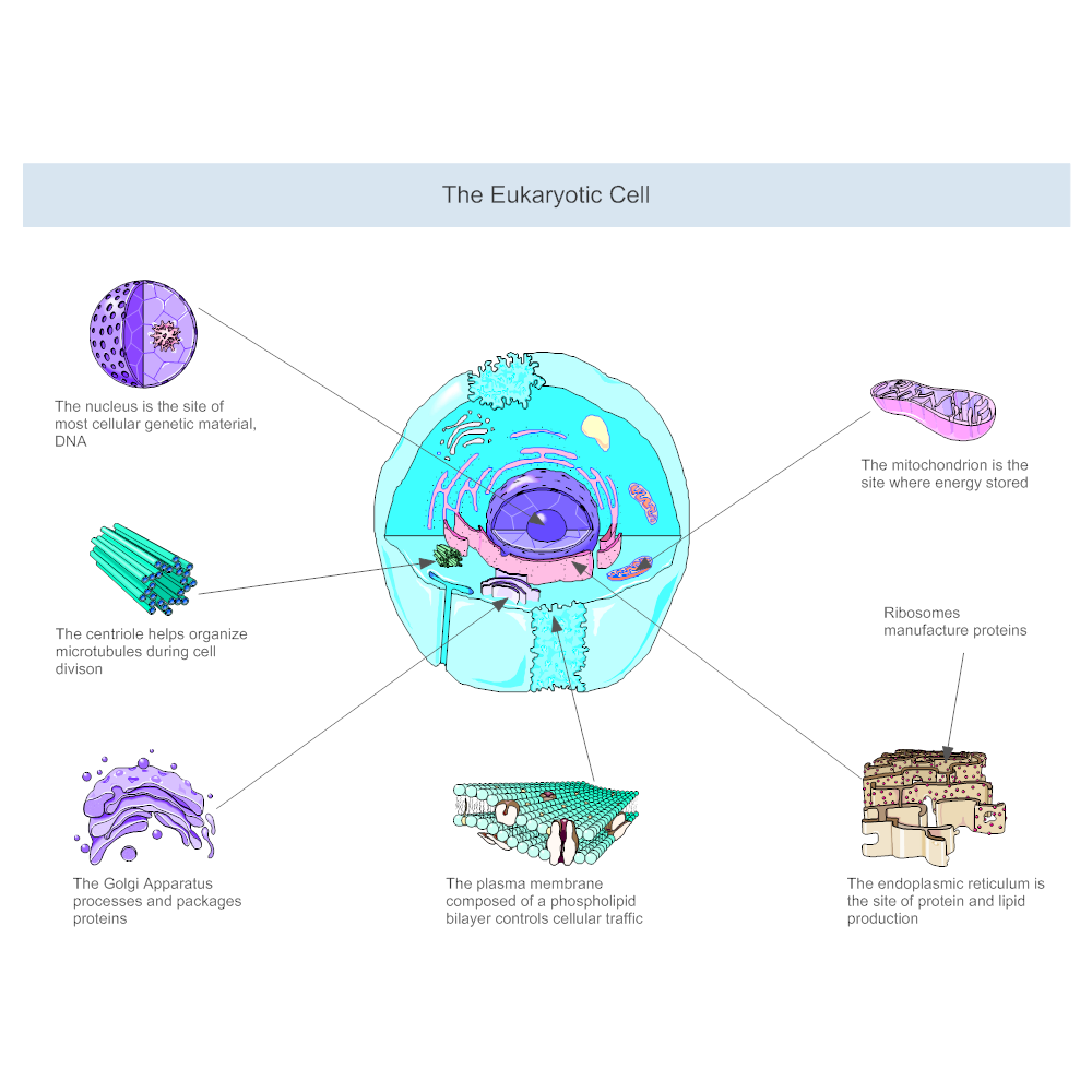 Example Image: Eukaryotic Cell Diagram