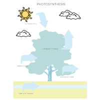 Biology diagram examples photosynthesis diagram ccuart Choice Image