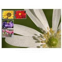 Flower Brochure