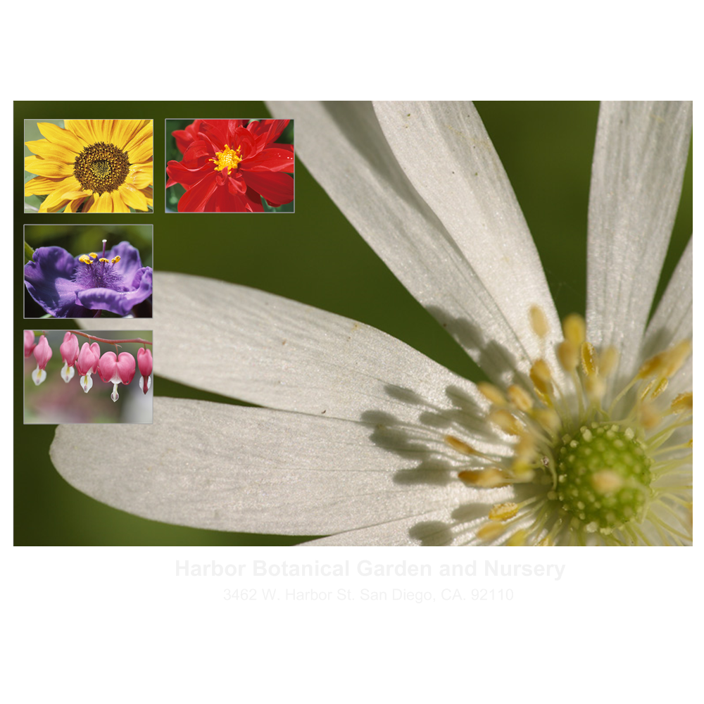Example Image: Flower Brochure