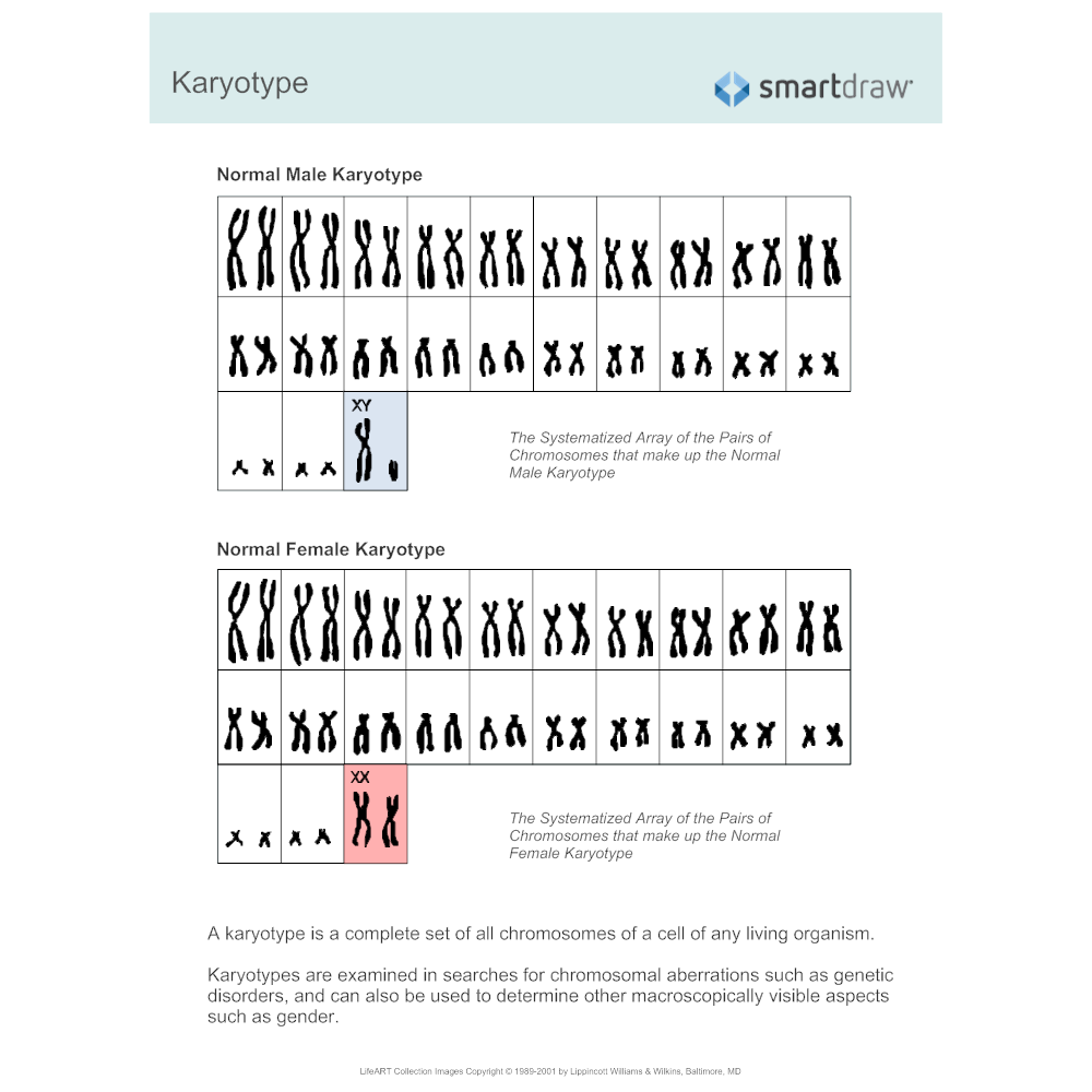 Example Image: Karyotype Diagram