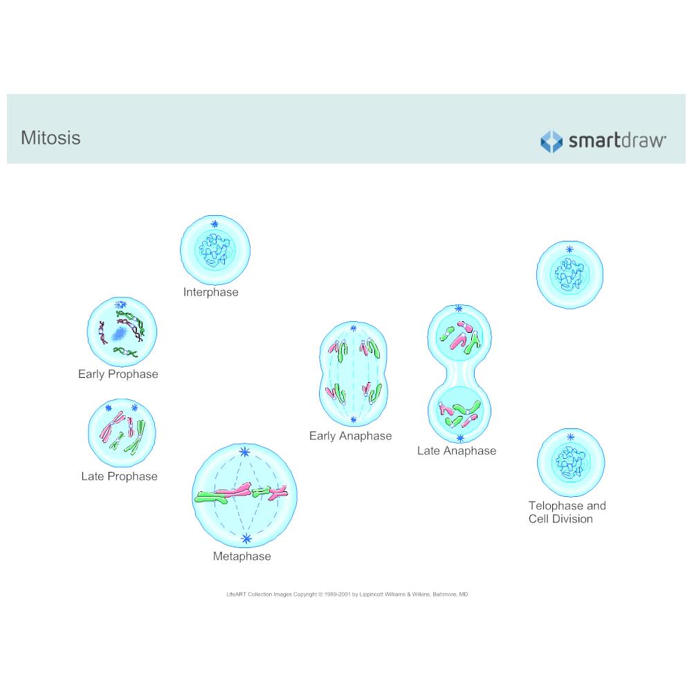 Example Image: Mitosis