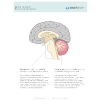 Brain Function - Brainstem & Cerebellum