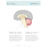 Brain Function - Brainstem & Cerebellum