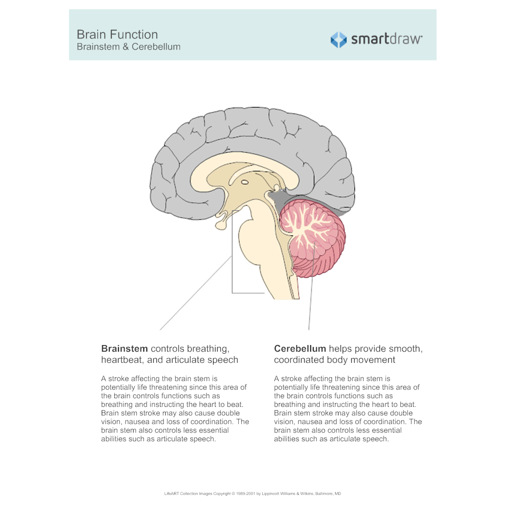 Example Image: Brain Function - Brainstem & Cerebellum
