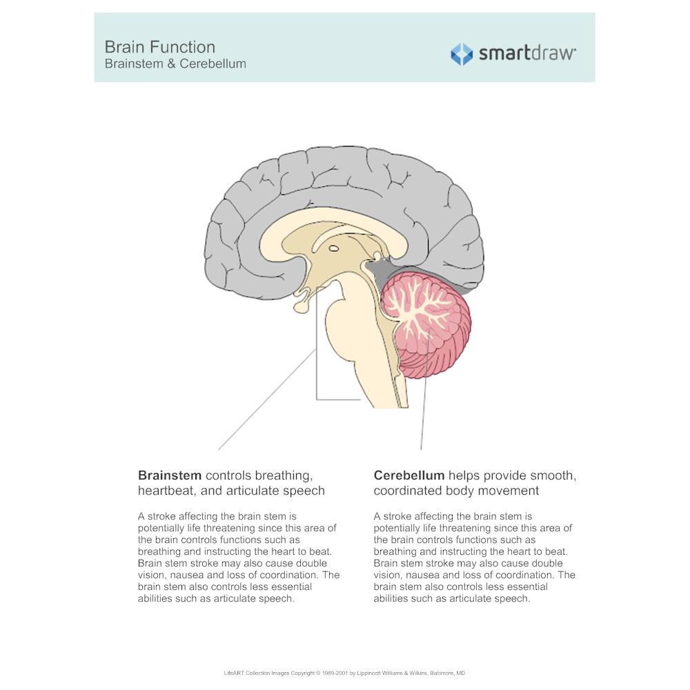 Example Image: Brain Function - Brainstem & Cerebellum