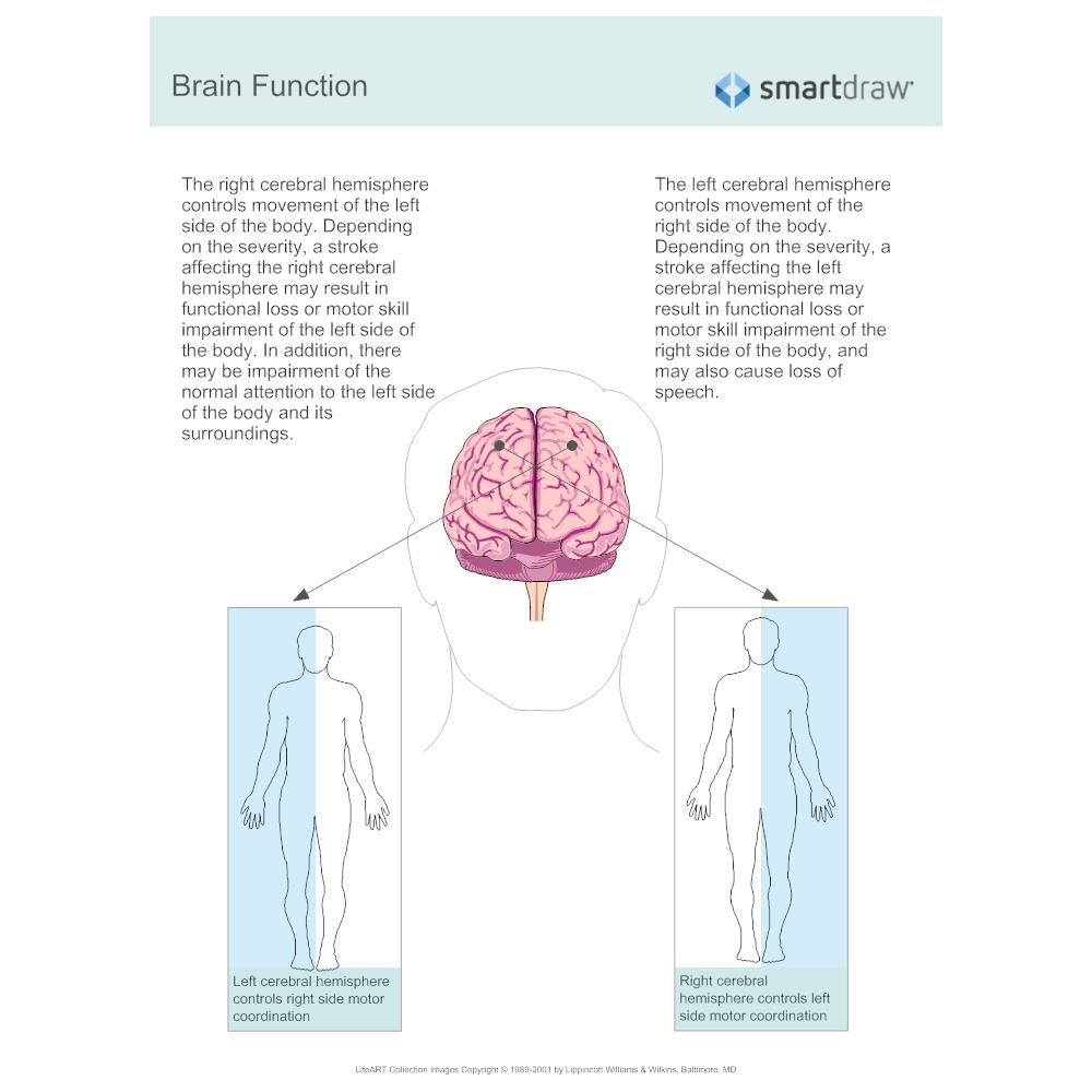 Example Image: Brain Function