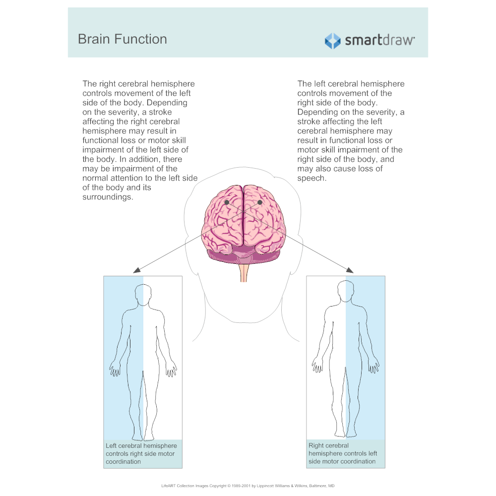 Example Image: Brain Function