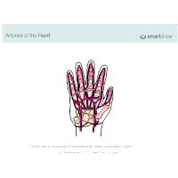 Arteries of the Hand