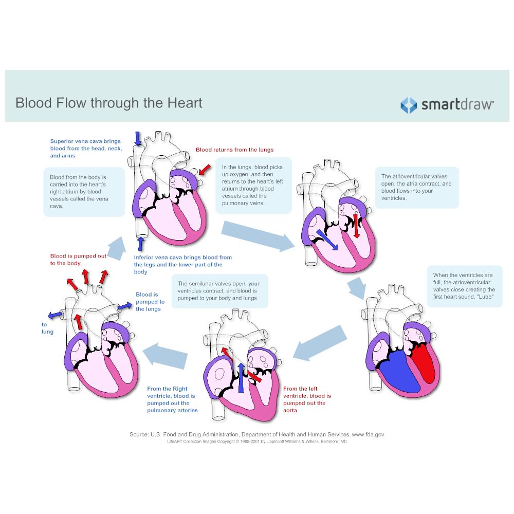 blood-flow-through-the-heart?bn=1510011085, Muscles