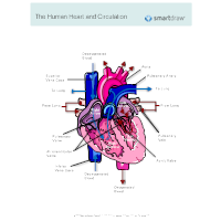 Circulatory System Diagrams