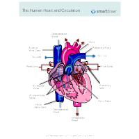 Healthcare Diagrams