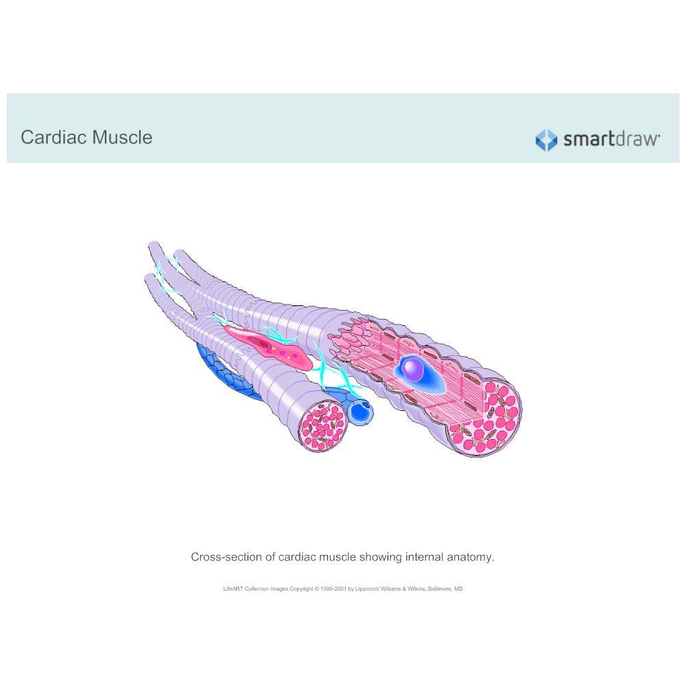 Example Image: Cardiac Muscle