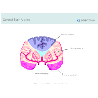 Coronal Brain Arteries
