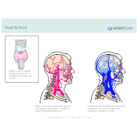 Head & Neck - Arteries & Veins