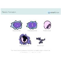 Platelet Formation