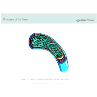 Structure of the Vein