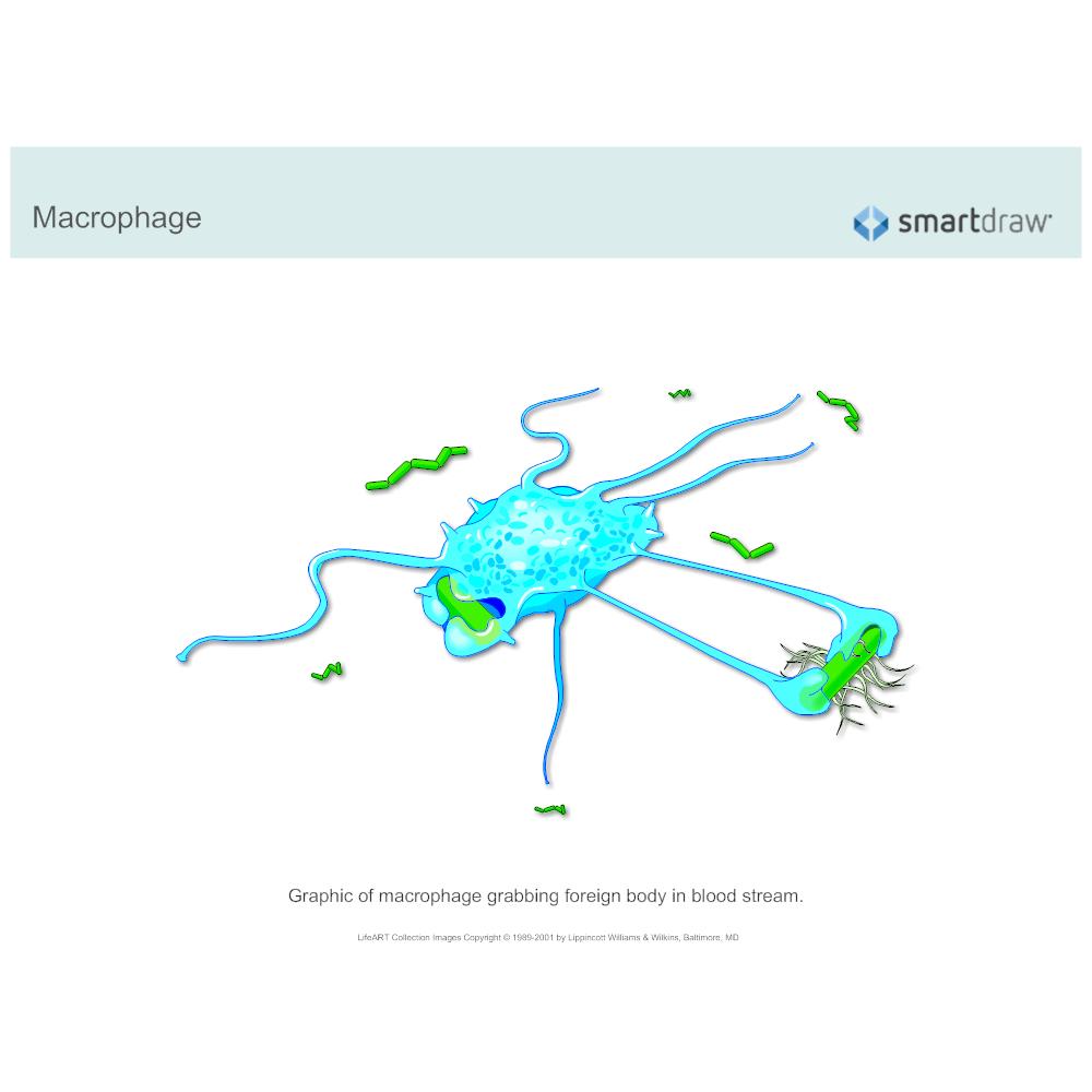 Example Image: Macrophage