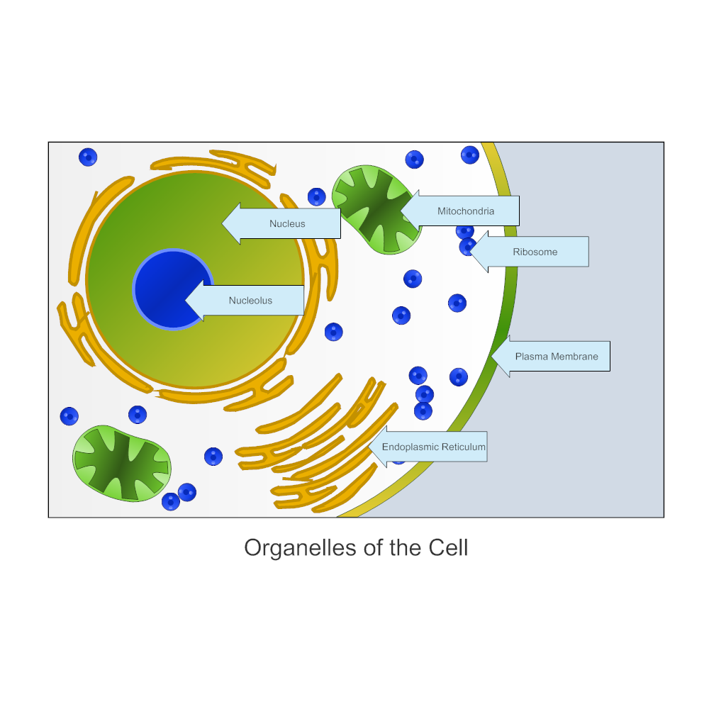 biology diagram examplesorganelles of a cell   biology diagram