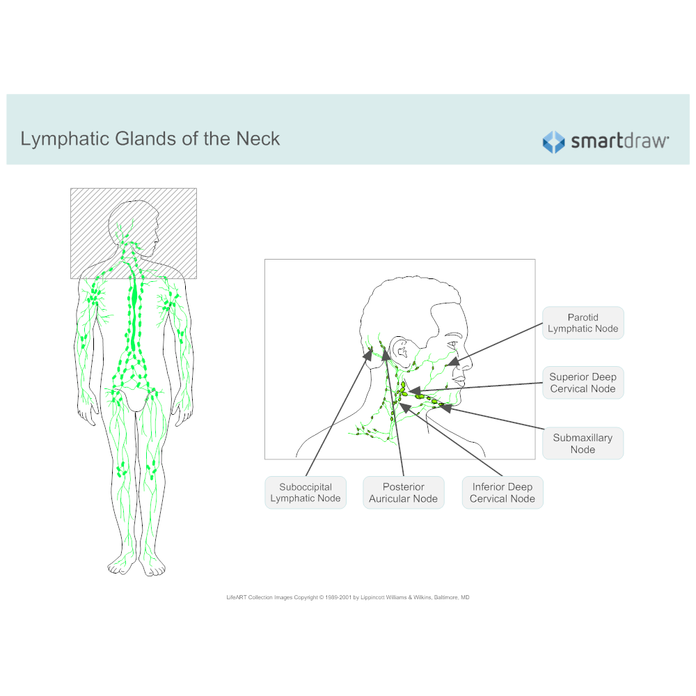 Example Image: Lymphatic System Diagram