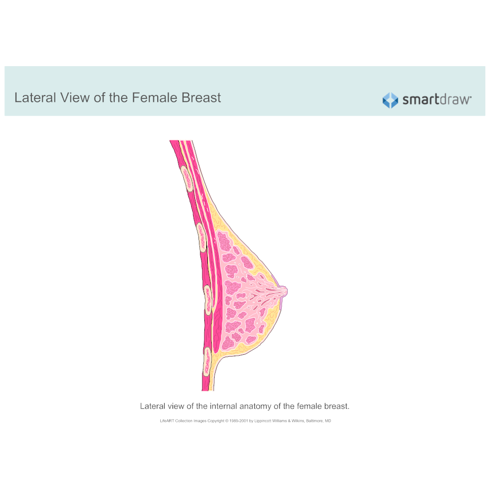 Example Image: Lateral View of the Female Breast