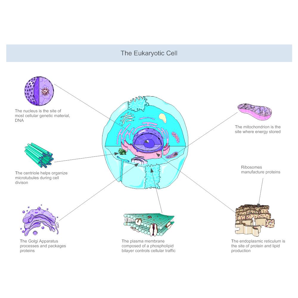 eukaryotic cell diagram : eukaryotic diagram - findchart.co