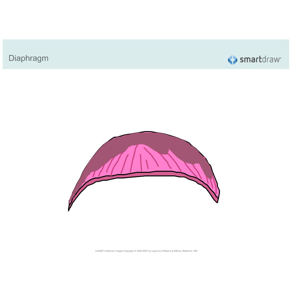 Example Image: The Diaphragm