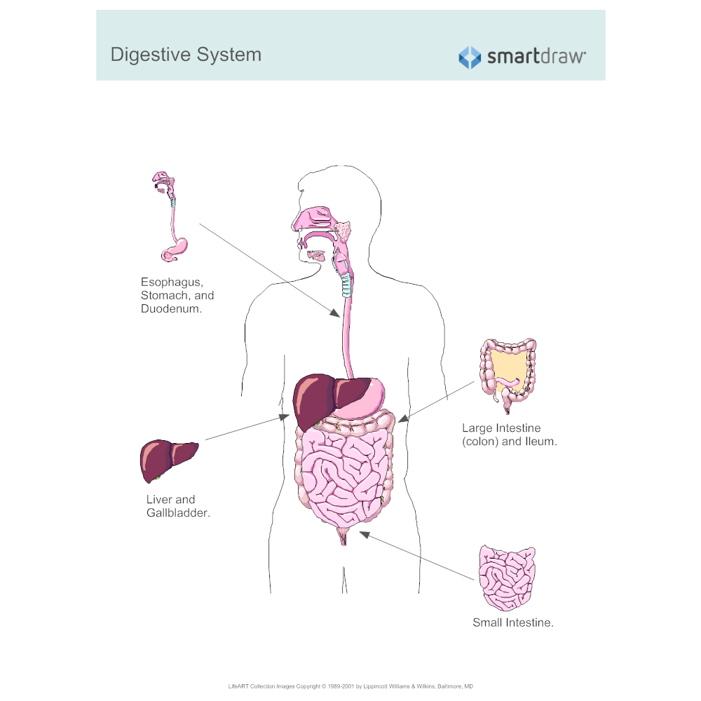 Example Image: Digestive System