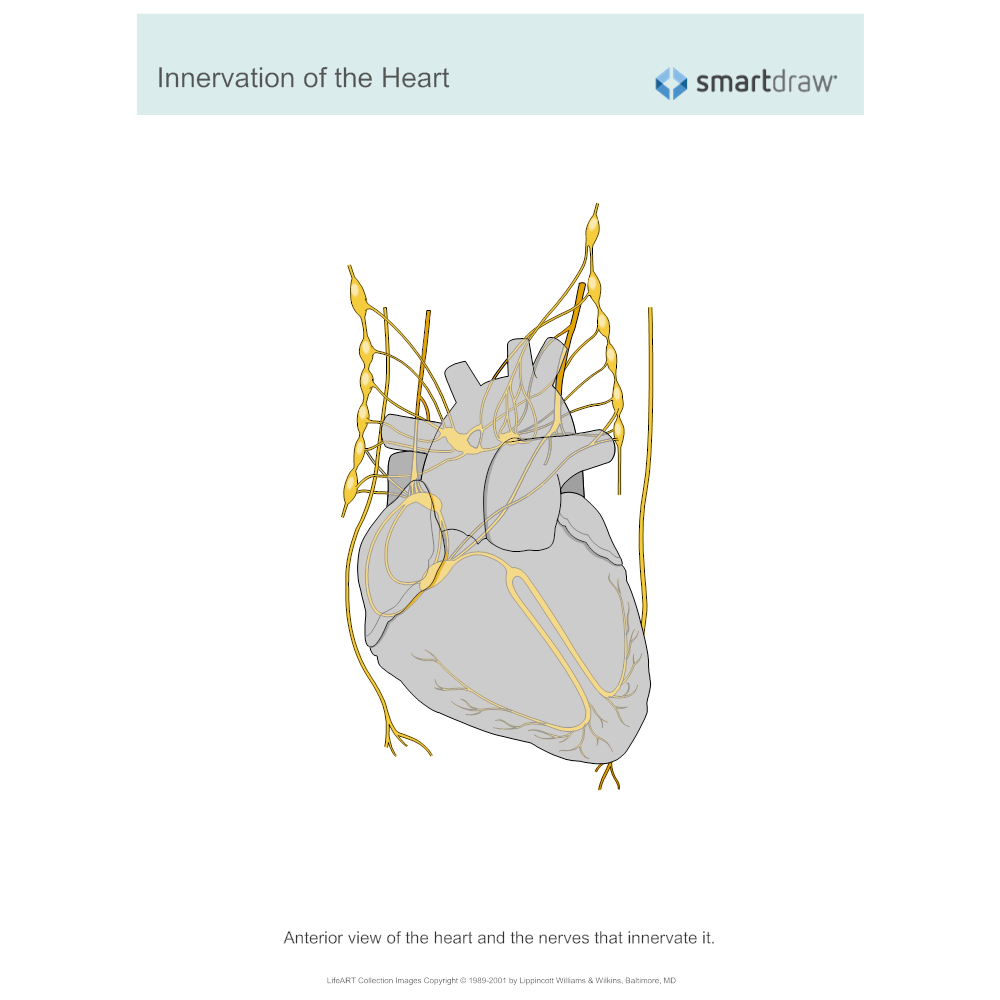 Example Image: Innervation of the Heart
