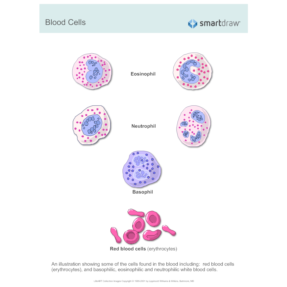 Example Image: Blood Cells