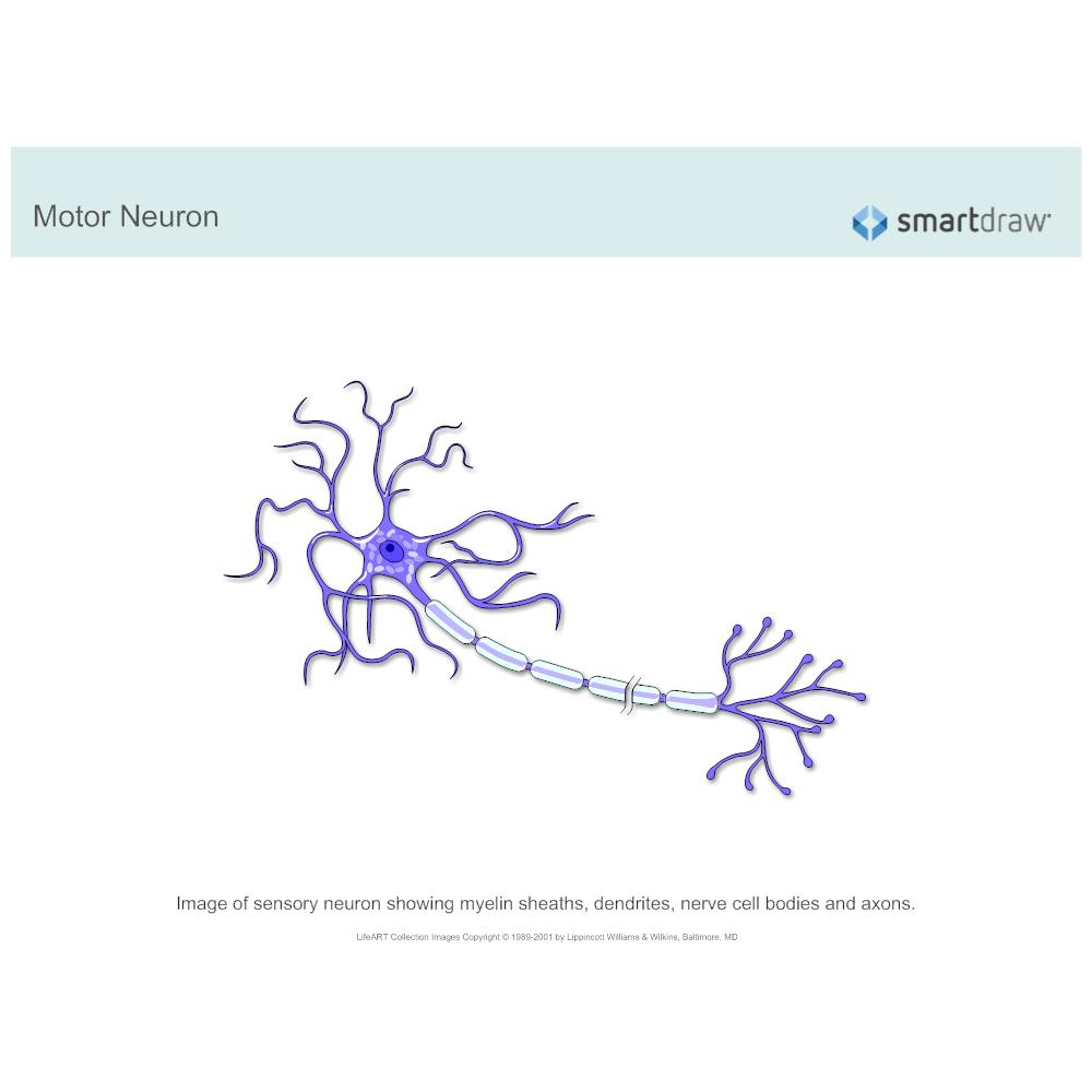 Example Image: Motor Neuron