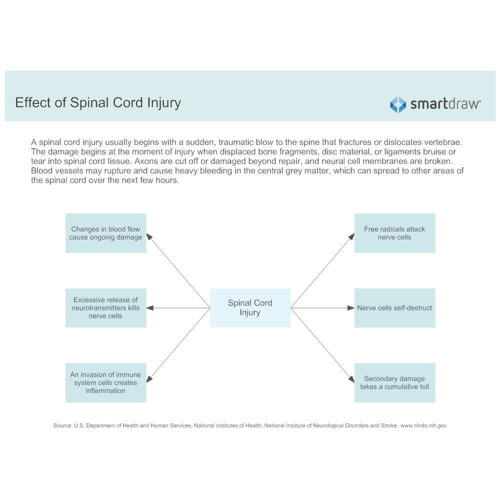 Example Image: Effect of Spinal Cord Injury
