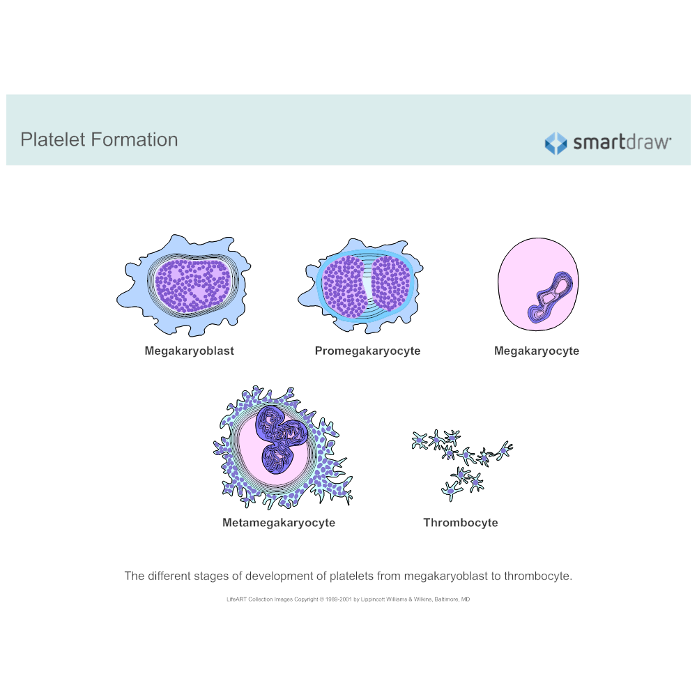 Example Image: Platelet Formation