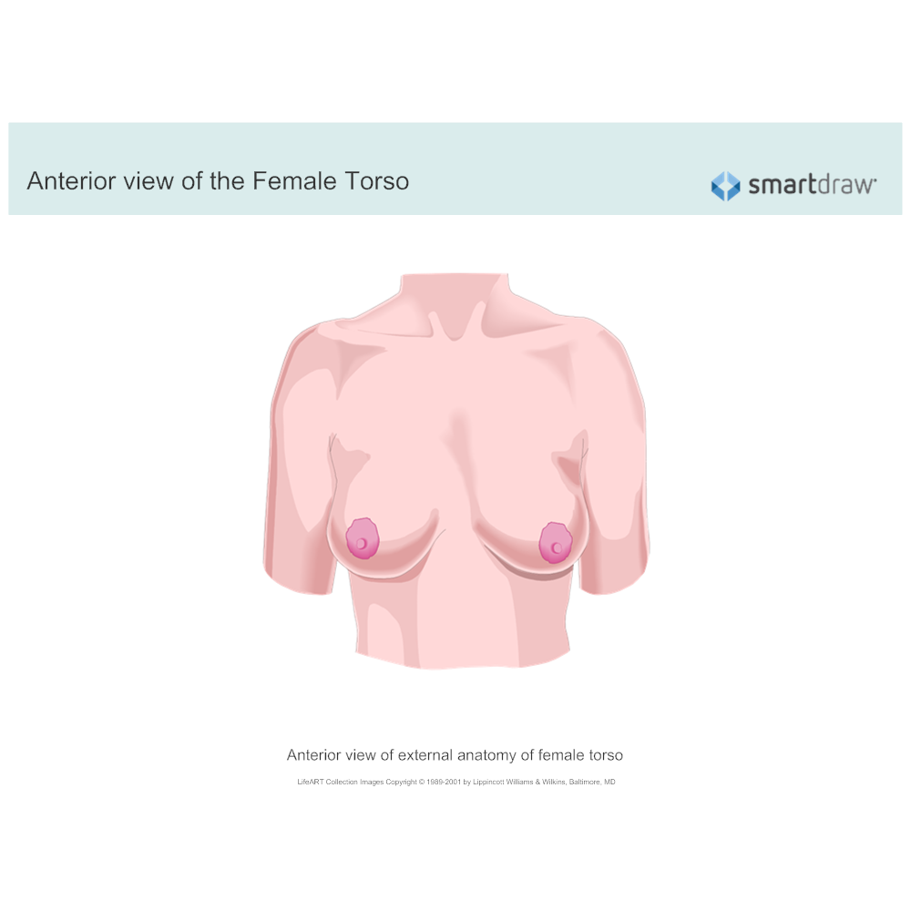 Example Image: Anterior View of the Female Torso