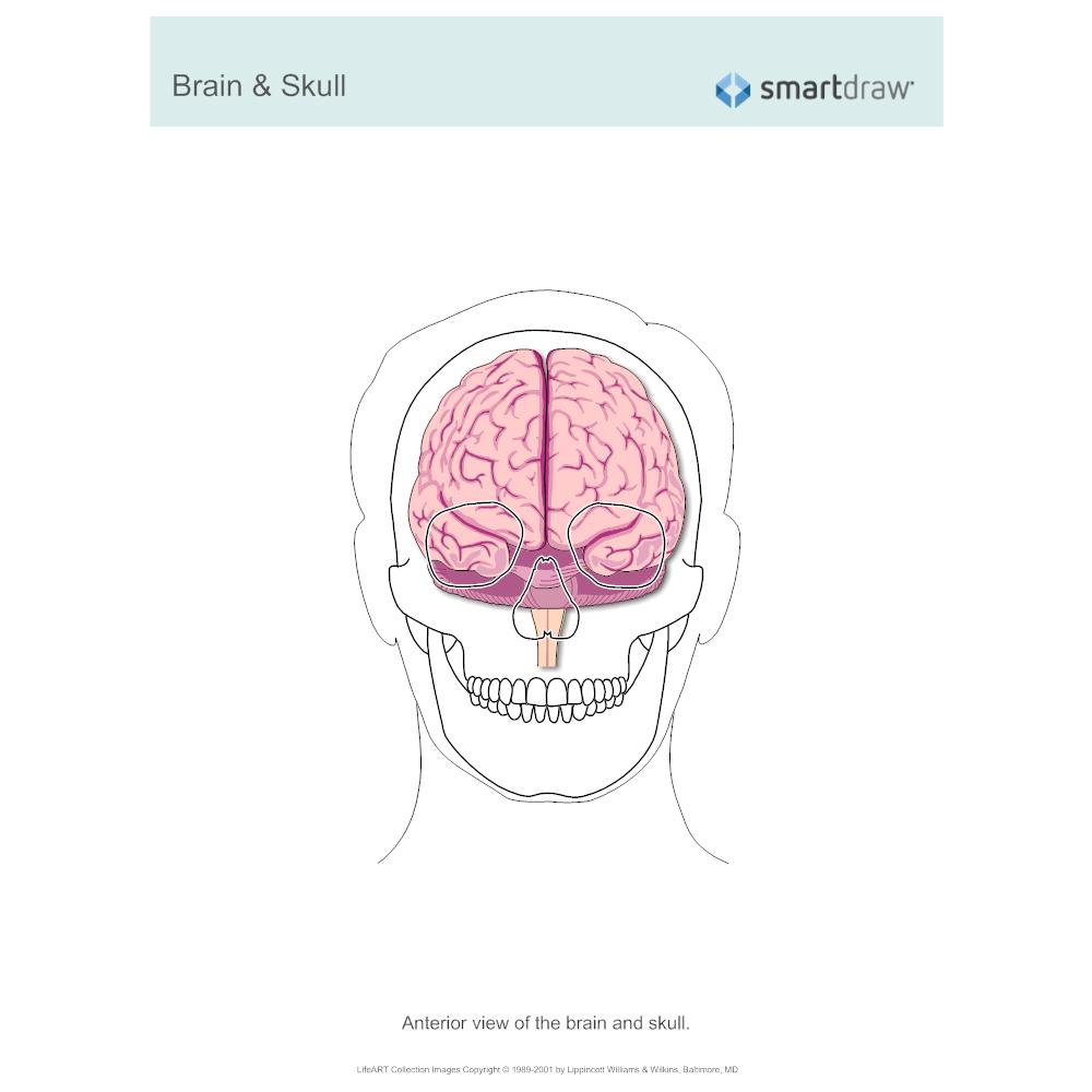 Example Image: Brain & Skull - Anterior View