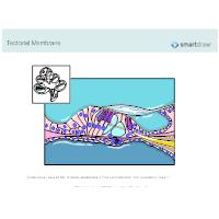 Tectorial Membrane