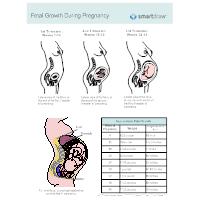 Growth of Human Fetus