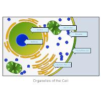 Biology Diagrams