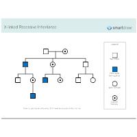 X-linked Recessive Inheritance