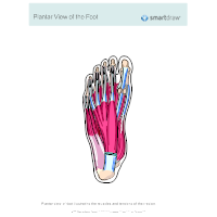 Plantar View of the Foot