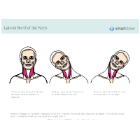 Lateral Bend of the Neck