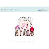 Periodontal Ligament Closeup