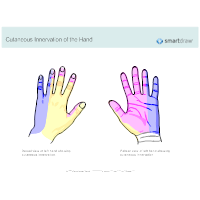Cutaneous Innervation of the Hand